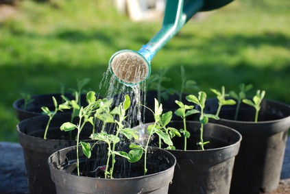 3 Steps to Get Your Business Growing Again